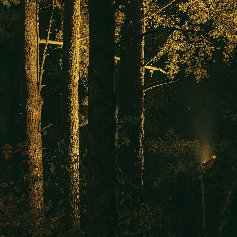 The Magical Forest Vuosaari 3